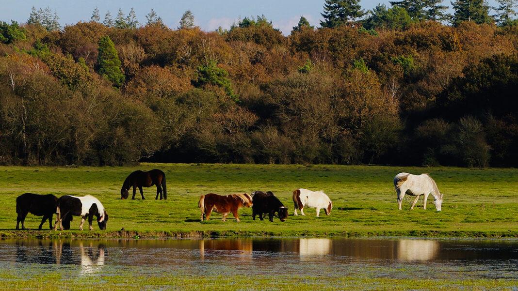 Can Solar Farms Promote Wildlife Habitat?